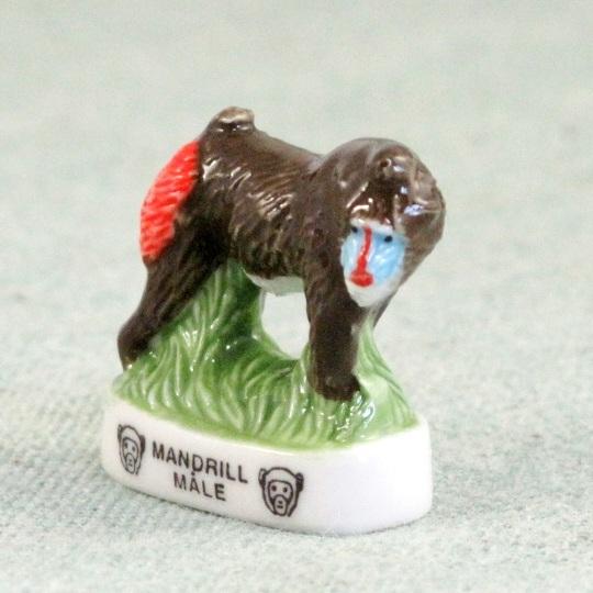 Mandrill Funky Monkey